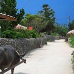 【20歳女子と交際?】大学2年の夏休みに1週間の短期間に沖縄でリゾートバイトしたら北海道からの女子と?【体験談・住み込み】
