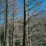 【18歳女子高生】箱根彫刻の森美術館の監視員のバイトはどうだった?【体験談】